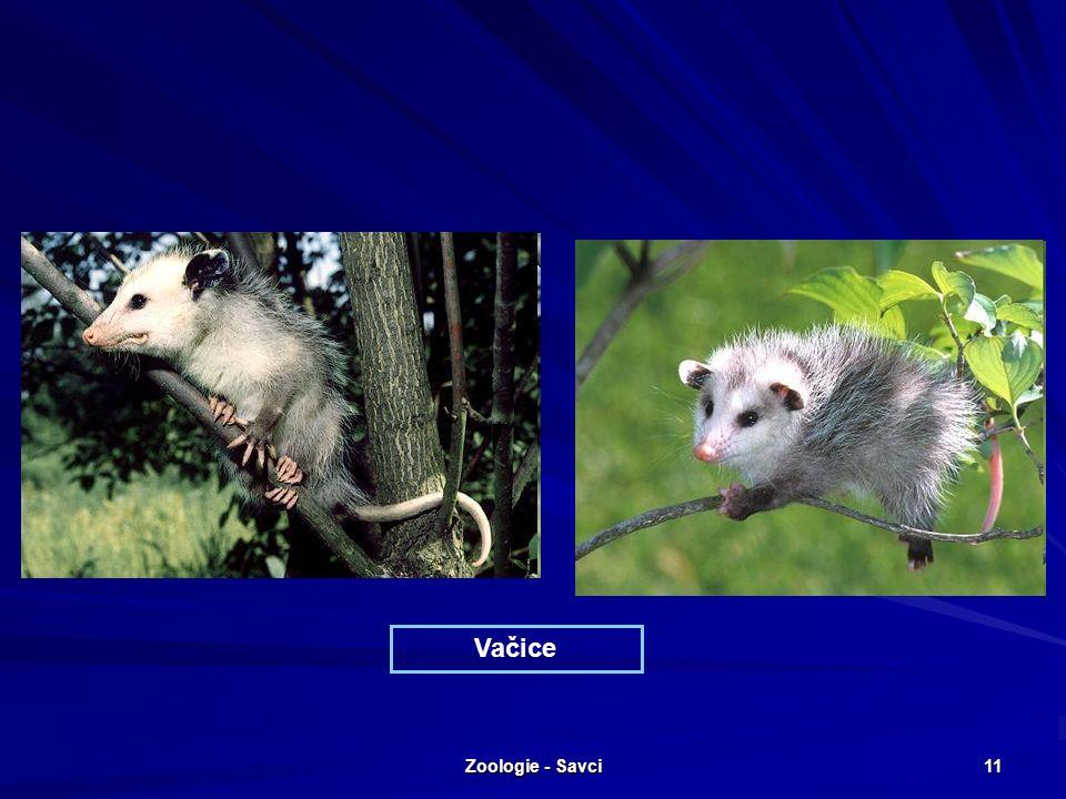 Zoologie - Savci 11 Vačice