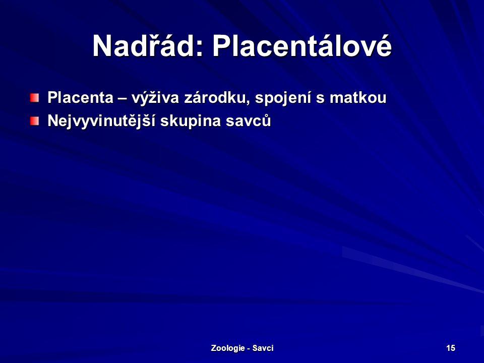 Nadřád: Placentálové Placenta – výživa zárodku, spojení s matkou Nejvyvinutější skupina savců Zoologie - Savci 15