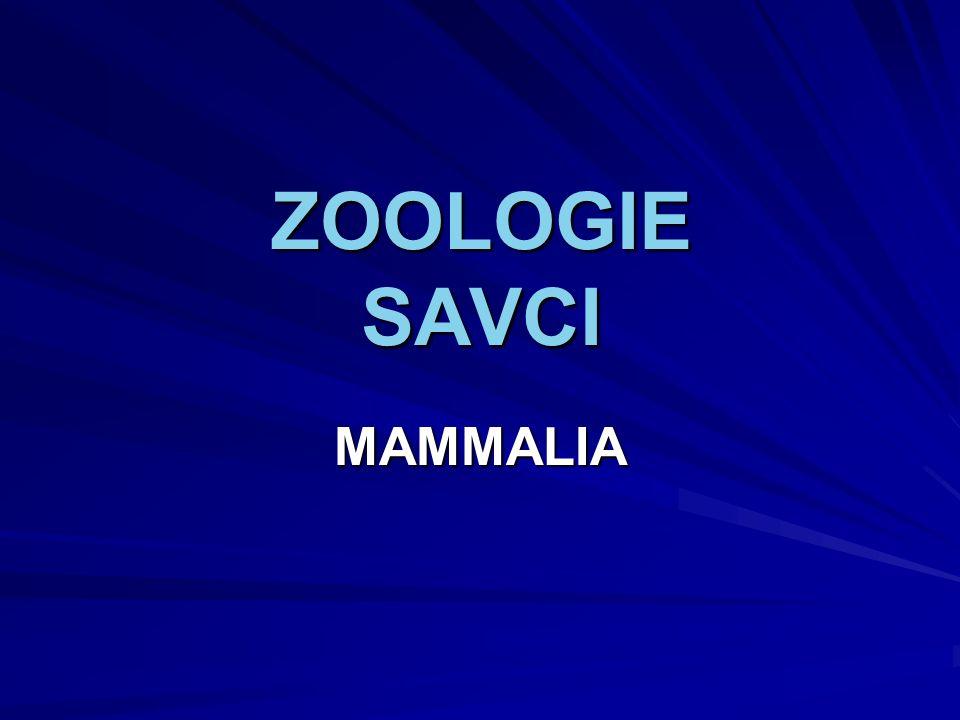 Zoologie - Savci 4 Charakteristika savců Teplokrevní živočichové (schopni udržovat stálou tělesnou teplotu).