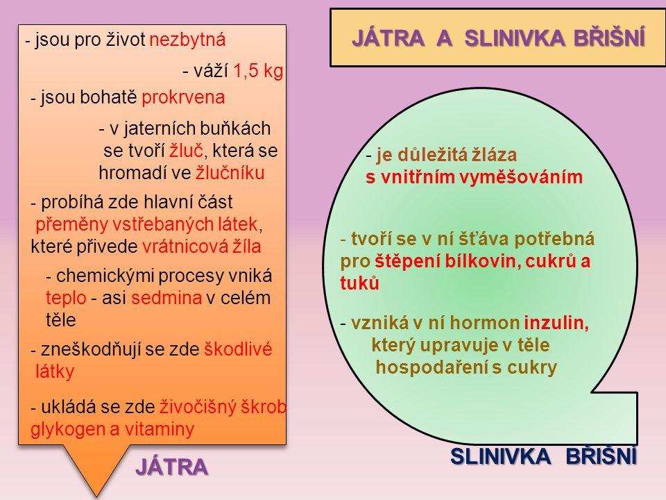 JÁTRA A SLINIVKA BŘIŠNÍ JÁTRA - jsou pro život nezbytná - váží 1,5 kg - jsou bohatě prokrvena - v jaterních buňkách se tvoří žluč, která se hromadí ve žlučníku - probíhá zde hlavní část přeměny vstřebaných látek, které přivede vrátnicová žíla - chemickými procesy vniká teplo - asi sedmina v celém těle - zneškodňují se zde škodlivé látky - ukládá se zde živočišný škrob glykogen a vitaminy SLINIVKA BŘIŠNÍ - je důležitá žláza s vnitřním vyměšováním - tvoří se v ní šťáva potřebná pro štěpení bílkovin, cukrů a tuků - vzniká v ní hormon inzulin, který upravuje v těle hospodaření s cukry