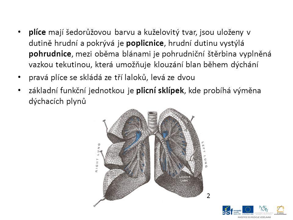 výměna plynů mezi vnějším prostředím a krví se nazývá plicní ventilace, dýchání je rytmické a automatické, můžeme je ovlivňovat vůlí (úmyslné zadržení dechu) má dvě fáze – vdech a výdech, umožňuje je činnost dýchacích svalů, hlavní jsou bránice, která pracuje na principu pístu, a mezižeberní svaly, které umožňují roztahování hrudníku a tím nasávání vzduchu do plic počet vdechů a výdechů za minutu se nazývá dechové frekvence, dospělý člověk se nadechne asi 16 – 18 krát za minutu, dítě 20 – 26 krát za minutu 3