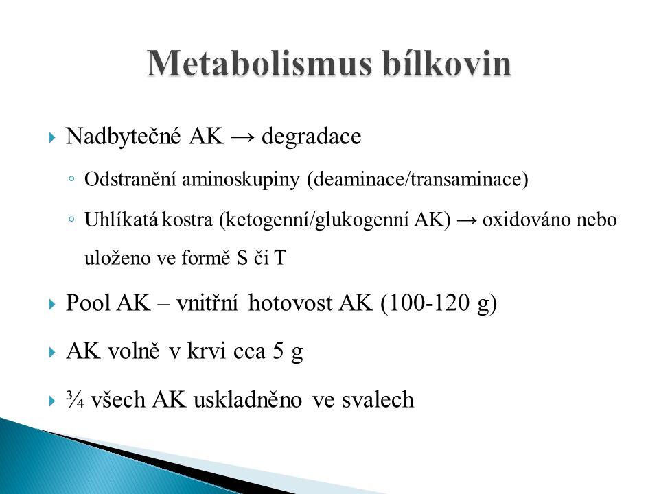  Nadbytečné AK → degradace ◦ Odstranění aminoskupiny (deaminace/transaminace) ◦ Uhlíkatá kostra (ketogenní/glukogenní AK) → oxidováno nebo uloženo ve formě S či T  Pool AK – vnitřní hotovost AK (100-120 g)  AK volně v krvi cca 5 g  ¾ všech AK uskladněno ve svalech