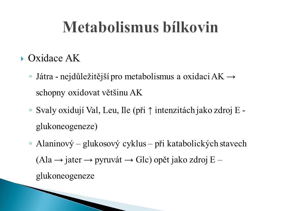  Oxidace AK ◦ Játra - nejdůležitější pro metabolismus a oxidaci AK → schopny oxidovat většinu AK ◦ Svaly oxidují Val, Leu, Ile (při ↑ intenzitách jako zdroj E - glukoneogeneze) ◦ Alaninový – glukosový cyklus – při katabolických stavech (Ala → jater → pyruvát → Glc) opět jako zdroj E – glukoneogeneze