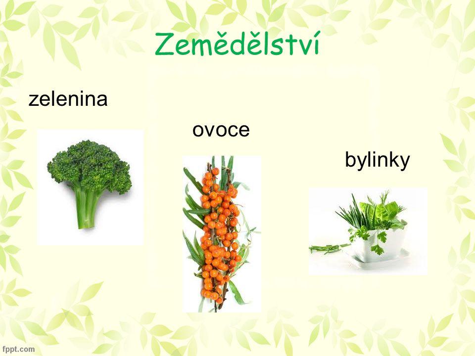 Zemědělství zelenina ovoce bylinky