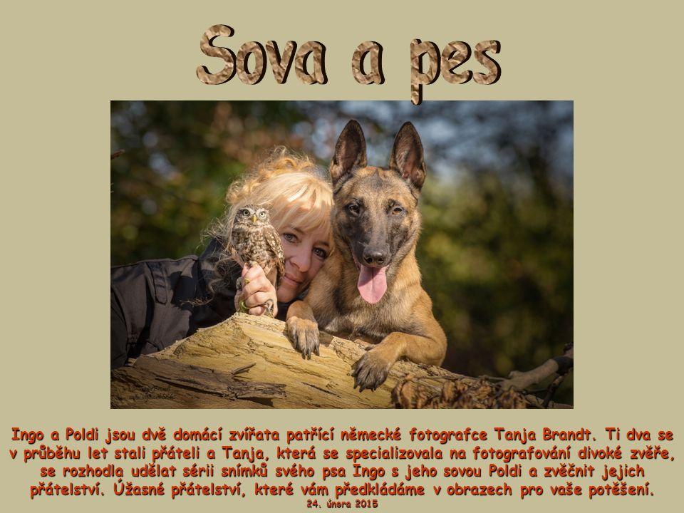 Ingo a Poldi jsou dvě domácí zvířata patřící německé fotografce Tanja Brandt. Ti dva se v průběhu let stali přáteli a Tanja, která se specializovala n