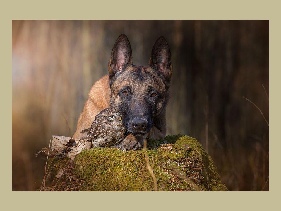 Ingo pravidelně pracuje jako model pro samotnou Tanju nebo pro jiné druhy.