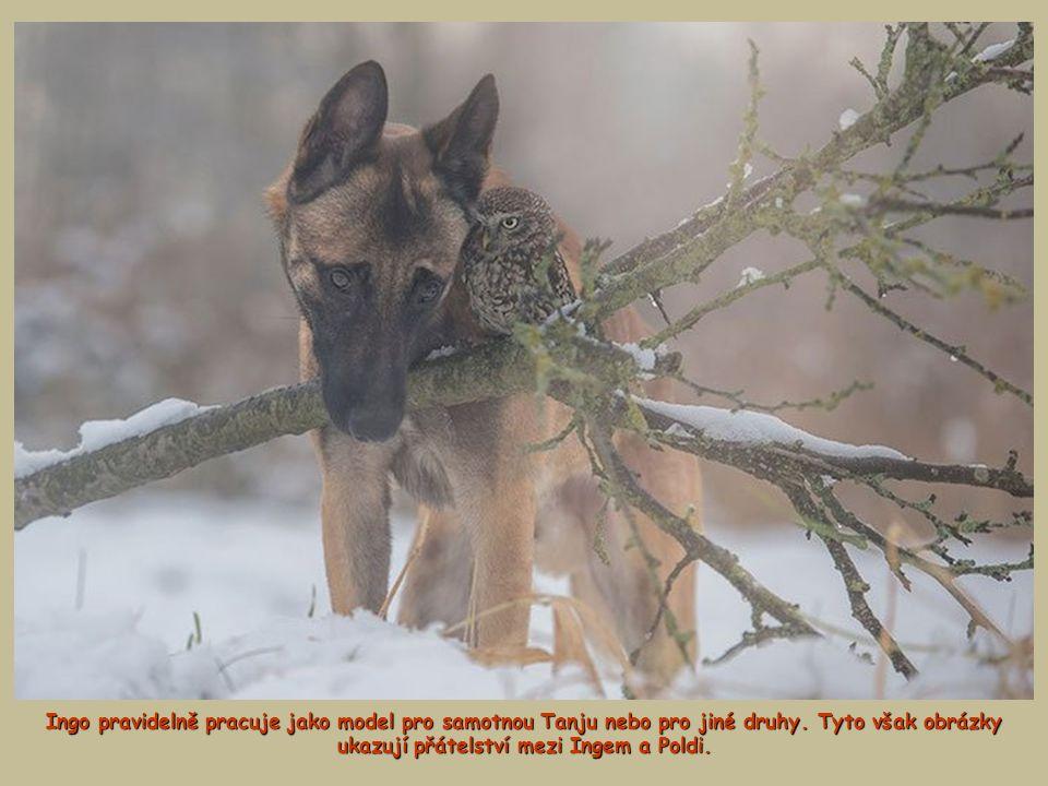 Ingo pravidelně pracuje jako model pro samotnou Tanju nebo pro jiné druhy. Tyto však obrázky ukazují přátelství mezi Ingem a Poldi.
