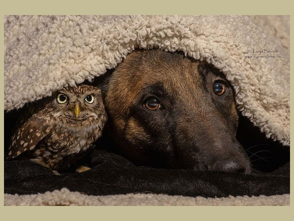 Fotografka Tanja Brandt a její pes Ingo Zvířata jsou opravdu úžasná.