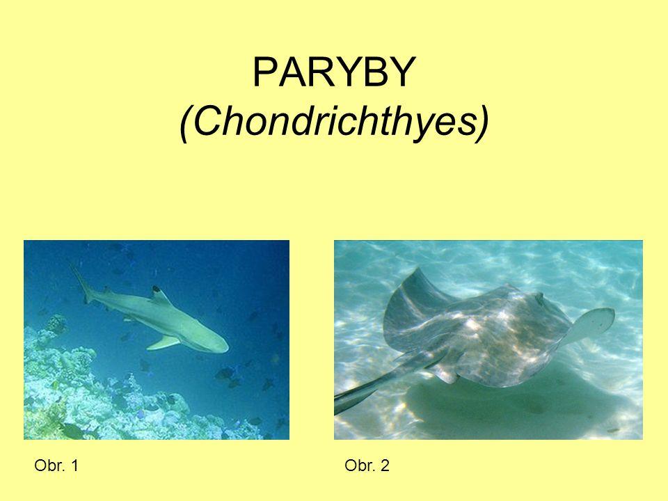 PARYBY (Chondrichthyes) Obr. 1Obr. 2