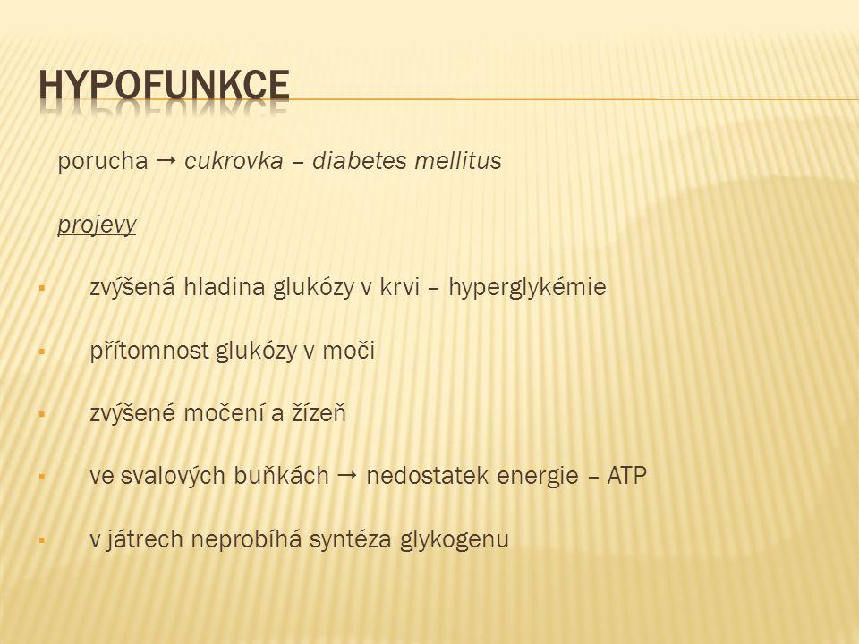 porucha  cukrovka – diabetes mellitus projevy  zvýšená hladina glukózy v krvi – hyperglykémie  přítomnost glukózy v moči  zvýšené močení a žízeň  ve svalových buňkách  nedostatek energie – ATP  v játrech neprobíhá syntéza glykogenu