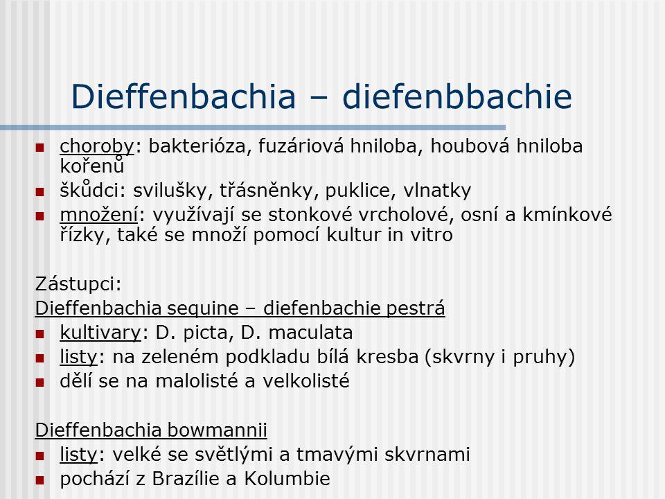 Dieffenbachia – diefenbbachie choroby: bakterióza, fuzáriová hniloba, houbová hniloba kořenů škůdci: svilušky, třásněnky, puklice, vlnatky množení: využívají se stonkové vrcholové, osní a kmínkové řízky, také se množí pomocí kultur in vitro Zástupci: Dieffenbachia sequine – diefenbachie pestrá kultivary: D.