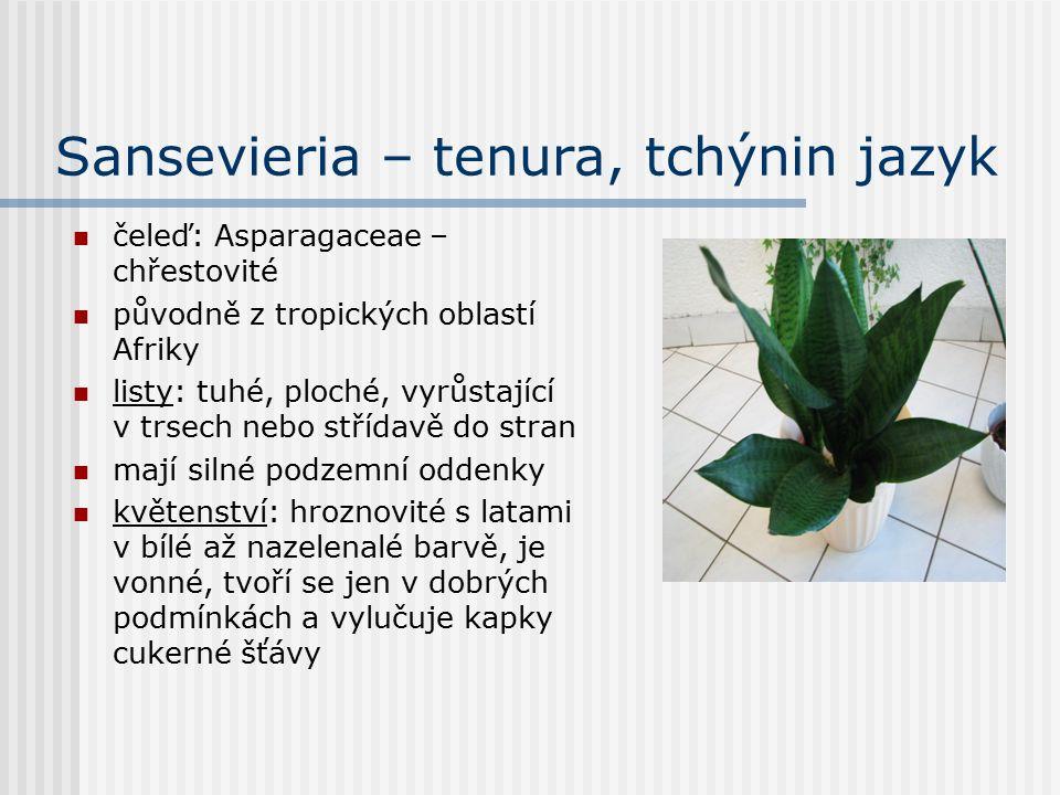 Sansevieria – tenura, tchýnin jazyk čeleď: Asparagaceae – chřestovité původně z tropických oblastí Afriky listy: tuhé, ploché, vyrůstající v trsech nebo střídavě do stran mají silné podzemní oddenky květenství: hroznovité s latami v bílé až nazelenalé barvě, je vonné, tvoří se jen v dobrých podmínkách a vylučuje kapky cukerné šťávy