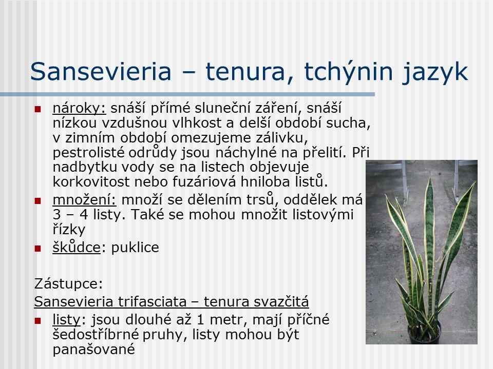 Peperomia – pepřinec čeleď: Piperaceae – pepřovníkovité vytrvalé rostliny pocházejí z tropických oblastí mohou být vzpřímené i převislé listy: střídavé, vstřícné nebo přeslenité, jsou dužnaté, jsou zelené i panašované, mohou být kožovité květenstvím je nápadná palice