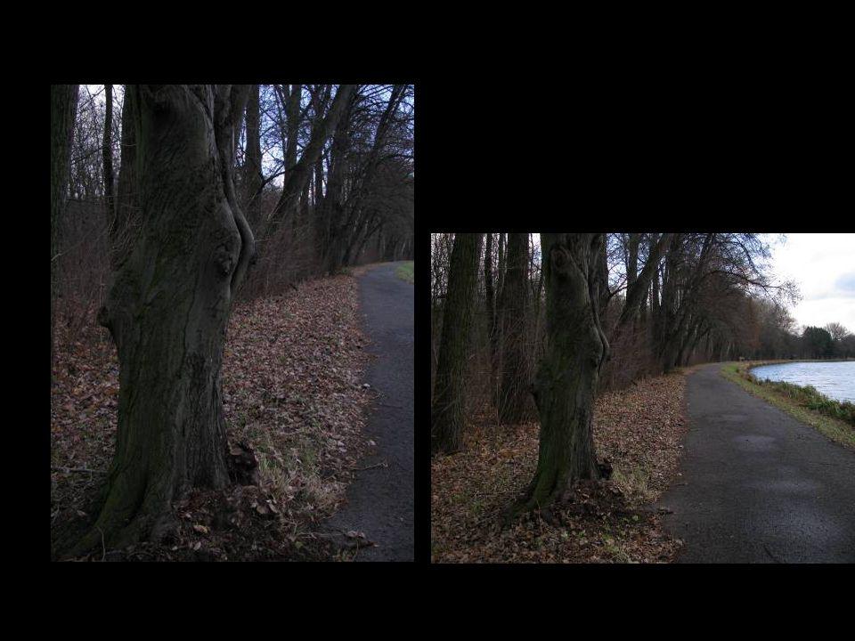 Asi 8 km dlouhá cesta podél Labe, kterou lemují nádherné stromy i v prosinci byla krásným zážitkem.