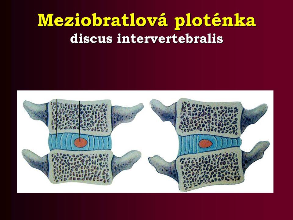 Meziobratlová ploténka discus intervertebralis