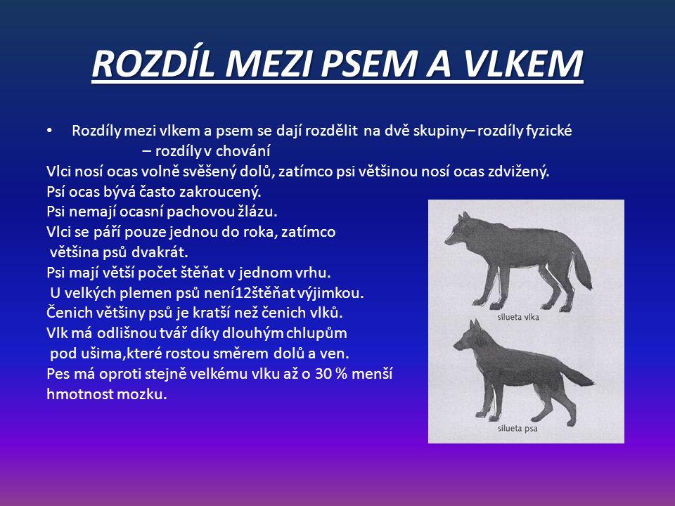ROZDÍL MEZI PSEM A VLKEM Rozdíly mezi vlkem a psem se dají rozdělit na dvě skupiny– rozdíly fyzické – rozdíly v chování Vlci nosí ocas volně svěšený dolů, zatímco psi většinou nosí ocas zdvižený.