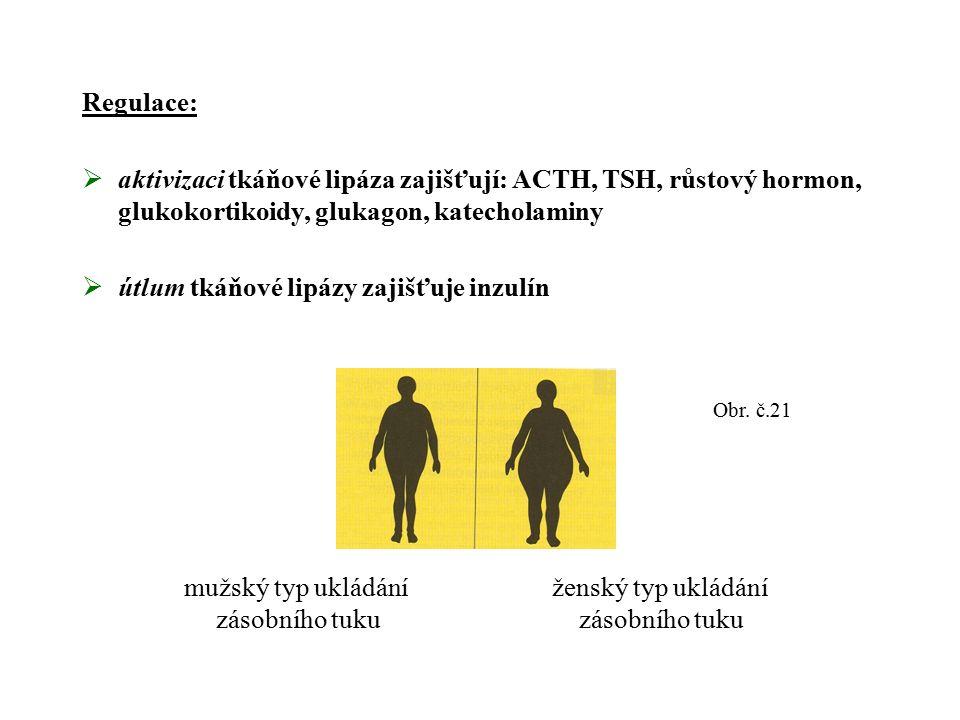 Regulace:  aktivizaci tkáňové lipáza zajišťují: ACTH, TSH, růstový hormon, glukokortikoidy, glukagon, katecholaminy  útlum tkáňové lipázy zajišťuje inzulín Obr.