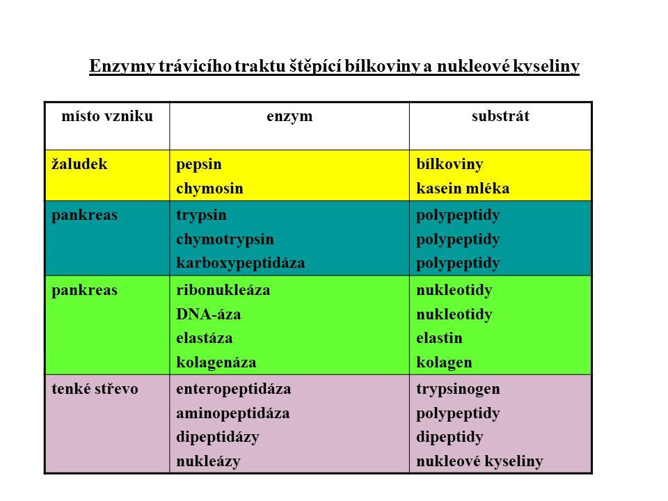 Enzymy trávicího traktu štěpící bílkoviny a nukleové kyseliny místo vznikuenzymsubstrát žaludekpepsin chymosin bílkoviny kasein mléka pankreastrypsin chymotrypsin karboxypeptidáza polypeptidy pankreasribonukleáza DNA-áza elastáza kolagenáza nukleotidy elastin kolagen tenké střevoenteropeptidáza aminopeptidáza dipeptidázy nukleázy trypsinogen polypeptidy dipeptidy nukleové kyseliny