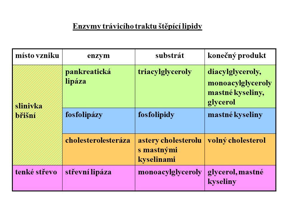 Enzymy trávicího traktu štěpící lipidy místo vznikuenzymsubstrátkonečný produkt slinivka břišní pankreatická lipáza triacylglycerolydiacylglyceroly, monoacylglyceroly mastné kyseliny, glycerol fosfolipázyfosfolipidymastné kyseliny cholesterolesterázaastery cholesterolu s mastnými kyselinami volný cholesterol tenké střevostřevní lipázamonoacylglycerolyglycerol, mastné kyseliny