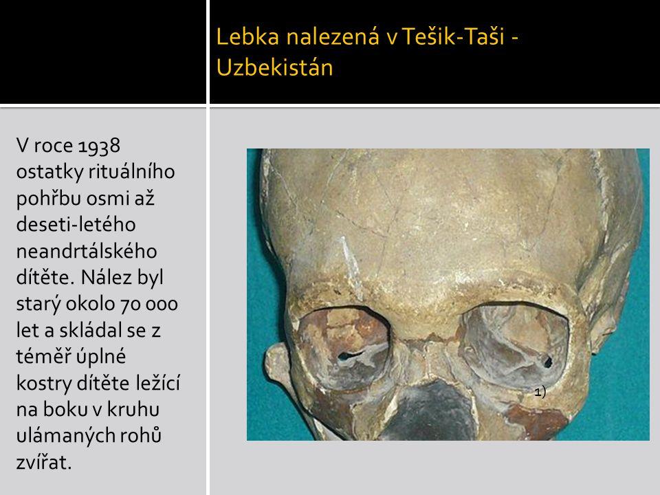 Lebka nalezená v Tešik-Taši - Uzbekistán V roce 1938 ostatky rituálního pohřbu osmi až deseti-letého neandrtálského dítěte. Nález byl starý okolo 70 0