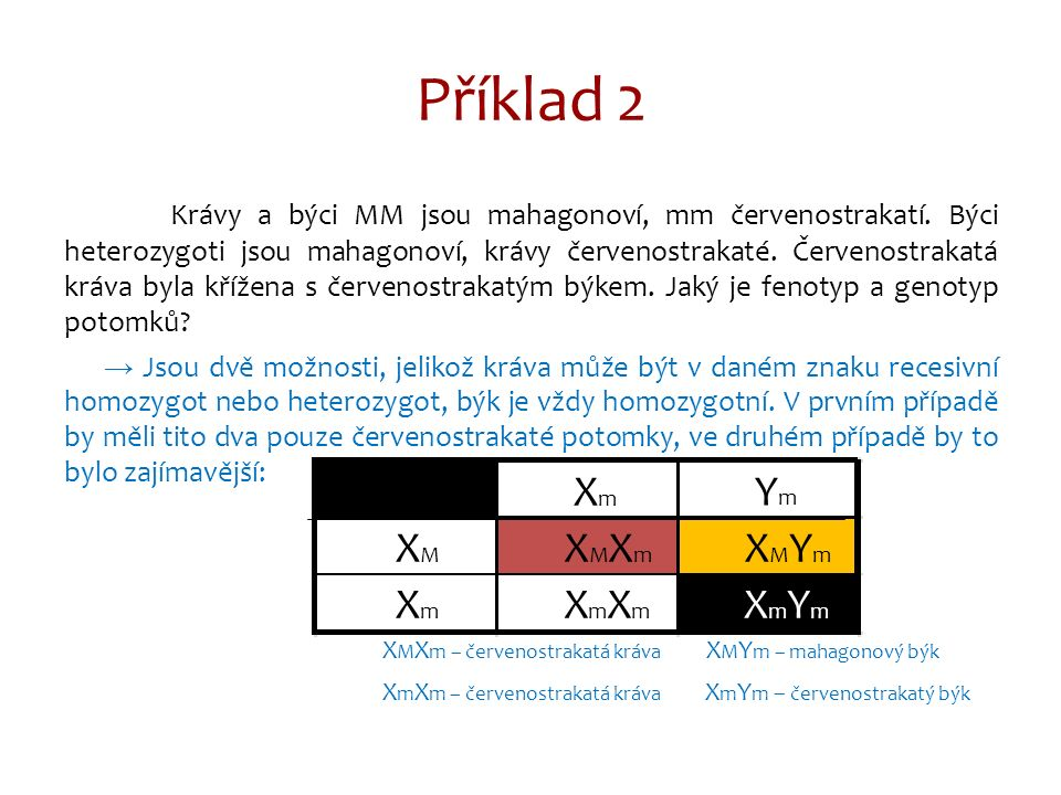 Příklad 3 Dědičnost pohlavně ovládaná – gen na autozómu se projeví jen u jednoho pohlaví U bojovnic je délka ploutví pohlavně ovládaná.