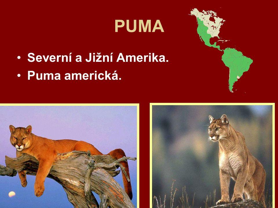 PUMA Severní a Jižní Amerika. Puma americká.