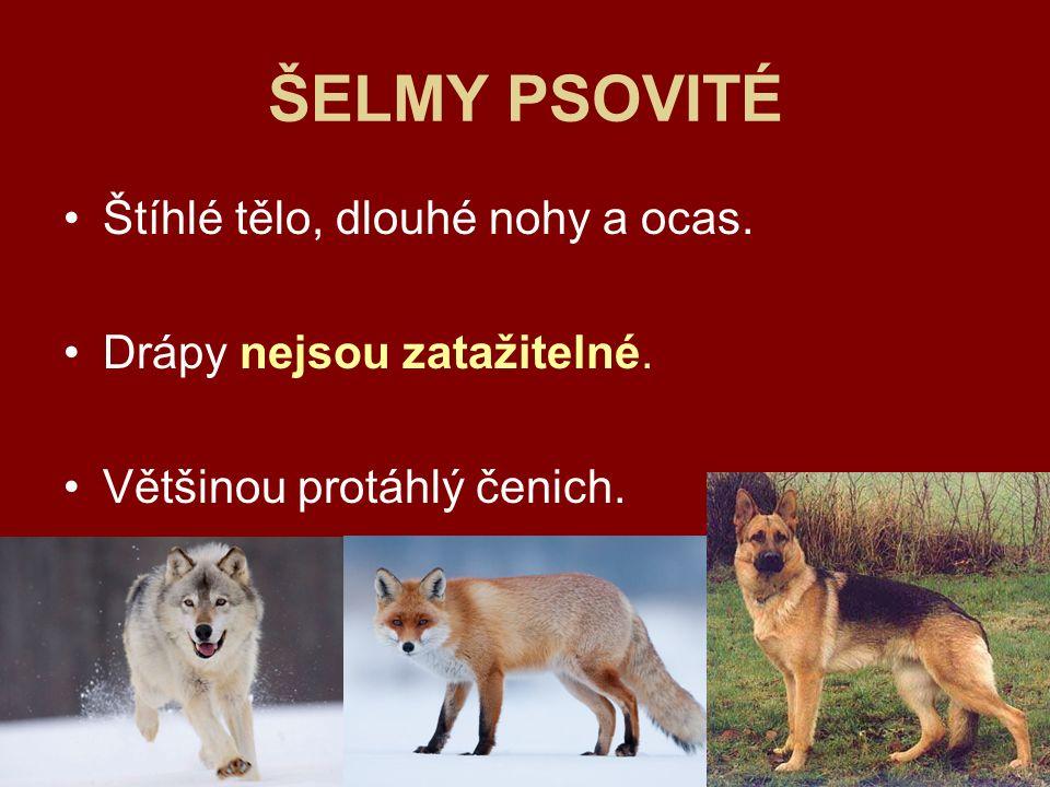 Vlk obecný (euroasijský) Celá severní polokoule>na mnoha místech vyhuben (chráněný).