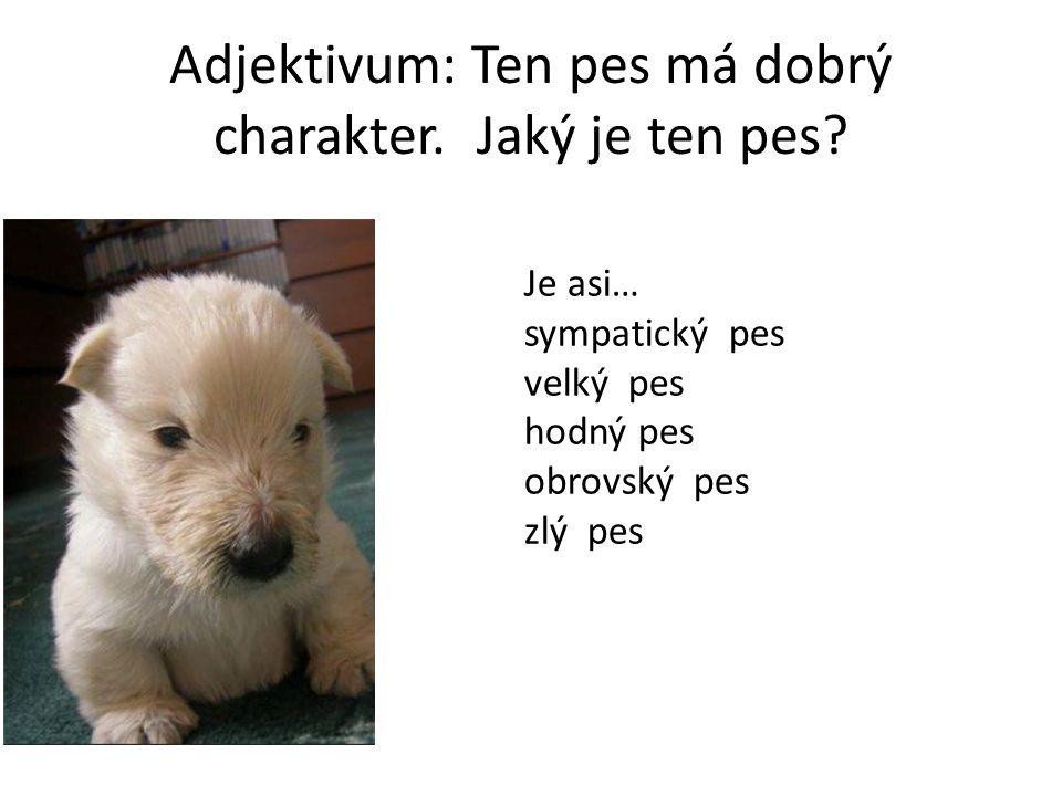 Adjektivum: Ten pes má dobrý charakter. Jaký je ten pes.