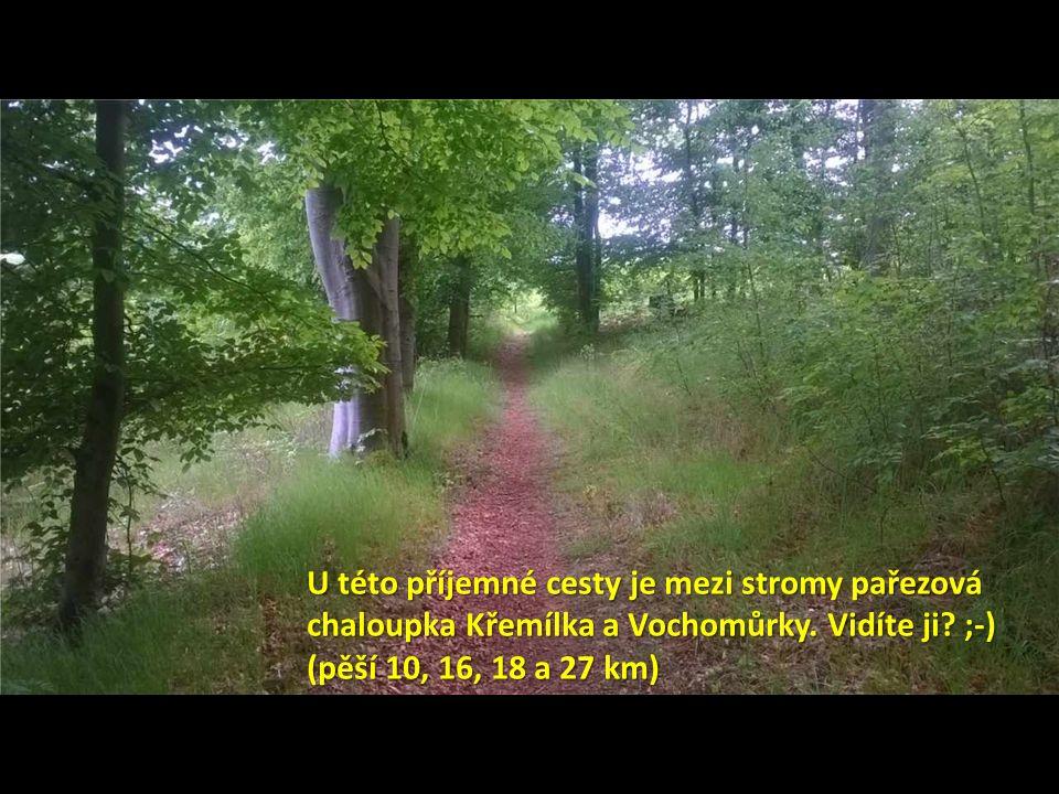 U této příjemné cesty je mezi stromy pařezová chaloupka Křemílka a Vochomůrky.