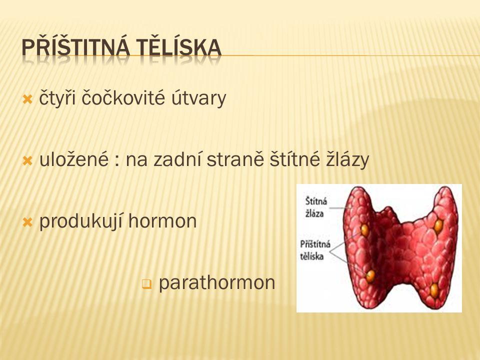  čtyři čočkovité útvary  uložené : na zadní straně štítné žlázy  produkují hormon  parathormon