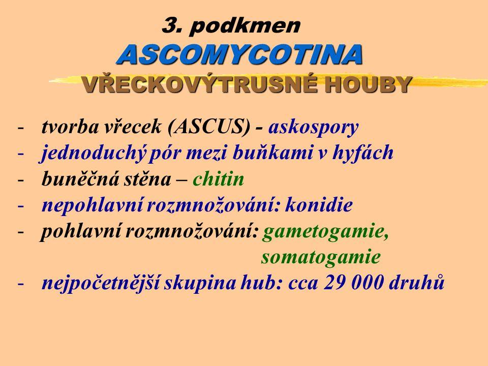 ASCOMYCOTINA 3.