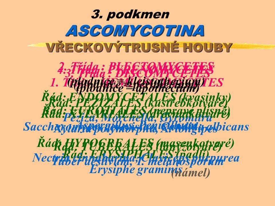 ASCOMYCOTINA 3. podkmen ASCOMYCOTINA VŘECKOVÝTRUSNÉ HOUBY 1.