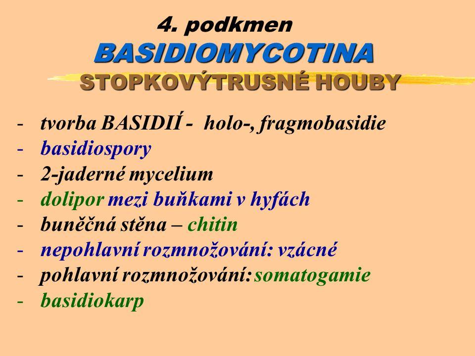 BASIDIOMYCOTINA 4.