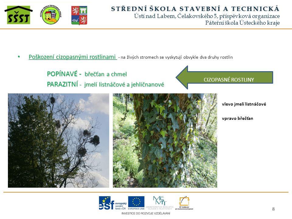 Poškození cizopasnými rostlinami Poškození cizopasnými rostlinami - na živých stromech se vyskytují obvykle dva druhy rostlin POPÍNAVÉ - břečťan a chmel PARAZITNÍ - jmelí listnáčové a jehličnanové vlevo jmelí listnáčové vpravo břečťan 8888888888 STŘEDNÍ ŠKOLA STAVEBNÍ A TECHNICKÁSTŘEDNÍ ŠKOLA STAVEBNÍ A TECHNICKÁ Ústí nad Labem, Čelakovského 5, příspěvková organizace Páteřní škola Ústeckého kraje CIZOPASNÉ ROSTLINY