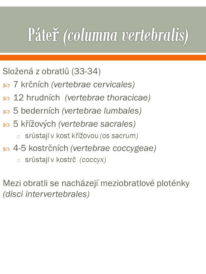 Složená z obratlů (33-34)  7 krčních (vertebrae cervicales)  12 hrudních (vertebrae thoracicae)  5 bederních (vertebrae lumbales)  5 křížových (vertebrae sacrales) o srůstají v kost křížovou (os sacrum)  4-5 kostrčních (vertebrae coccygeae) o srůstají v kostrč (coccyx) Mezi obratli se nacházejí meziobratlové ploténky (disci intervertebrales)