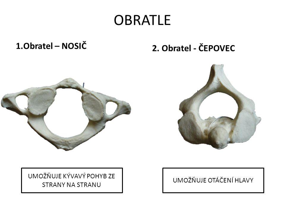 OBRATLE 1.Obratel – NOSIČ 2.