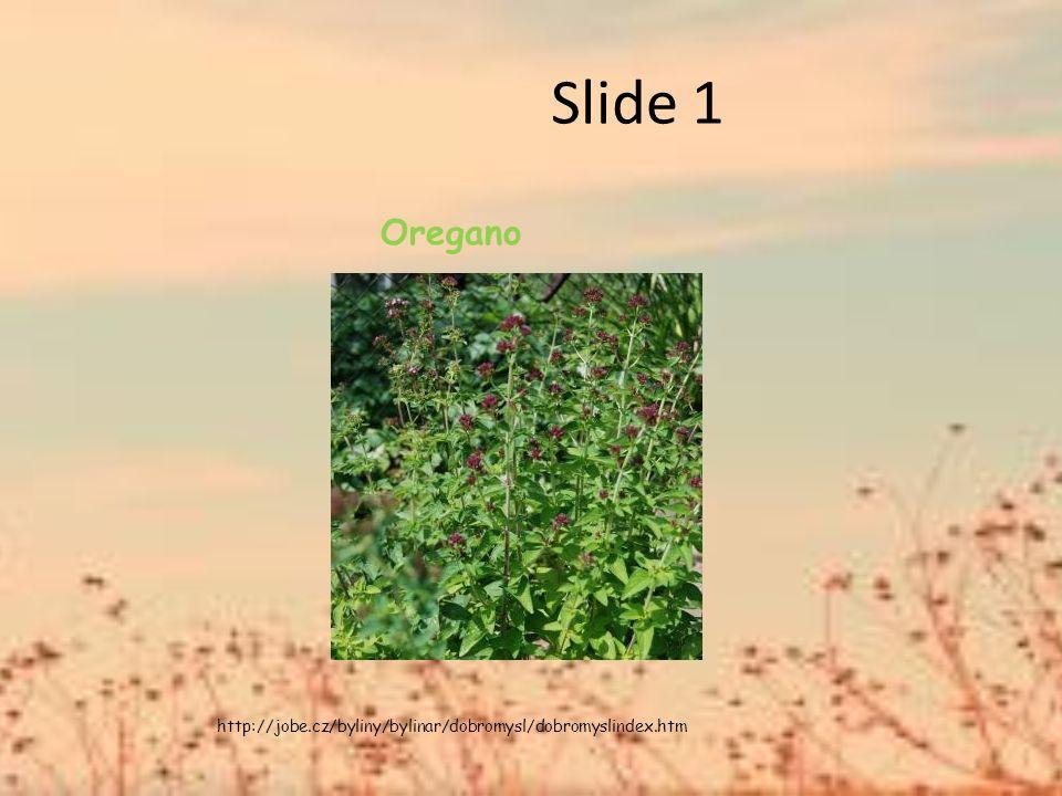 Slide 1 Oregano http://jobe.cz/byliny/bylinar/dobromysl/dobromyslindex.htm