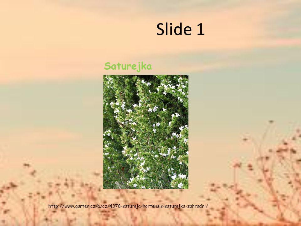 Slide 1 Saturejka http://www.garten.cz/a/cz/4378-satureja-hortensis-saturejka-zahradni/