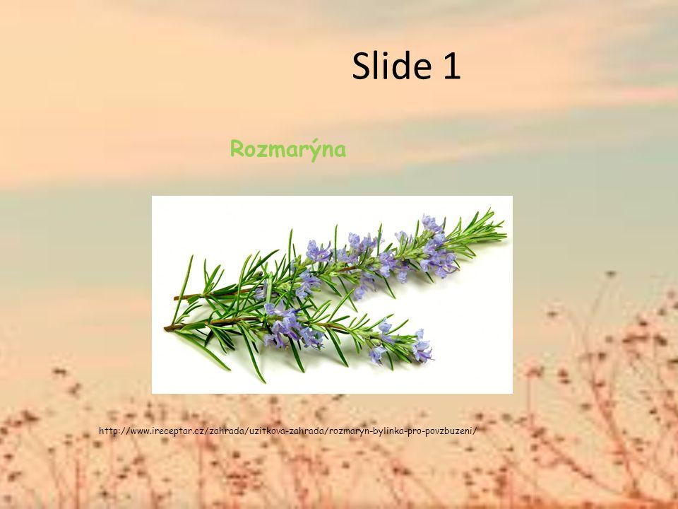 Slide 1 Rozmarýna http://www.ireceptar.cz/zahrada/uzitkova-zahrada/rozmaryn-bylinka-pro-povzbuzeni/