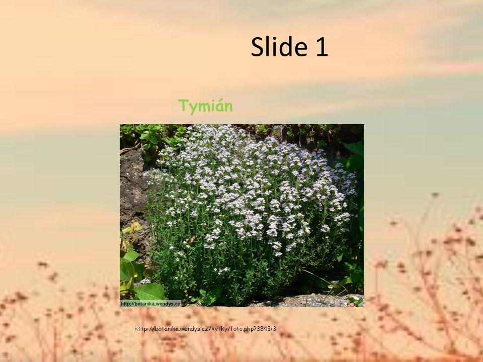 Slide 1 Tymián http://botanika.wendys.cz/kytky/foto.php 3843:3