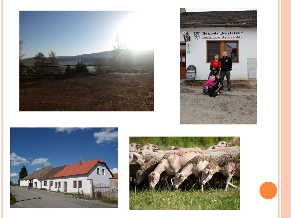 H LAVNÍ ZAMĚŘENÍ FARMY Statek Horní Dvorce se zaměřuje na chov dojných ovcí plemene Lacaune.
