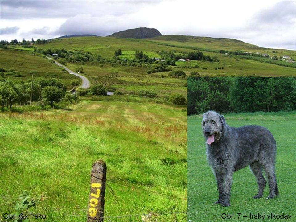 Obr. 6 - IrskoObr. 7 – Irský vlkodav