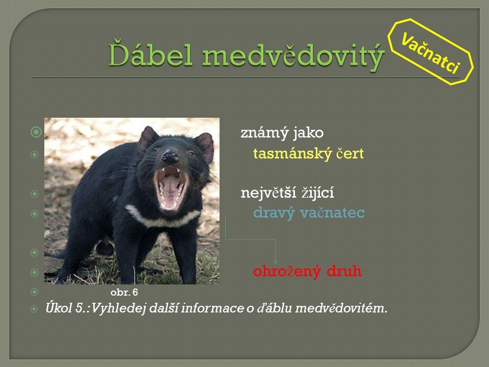  známý jako  tasmánský č ert  nejv ě tší ž ijící  dravý va č natec   ohro ž ený druh  obr. 6  Úkol 5.: Vyhledej další informace o ď áblu medv