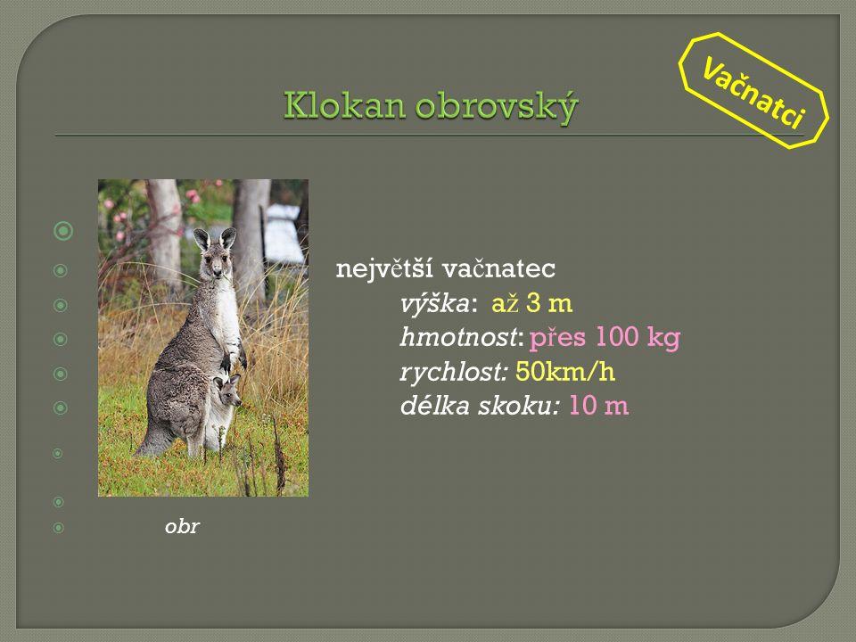   nejv ě tší va č natec  výška: a ž 3 m  hmotnost: p ř es 100 kg  rychlost: 50km/h  délka skoku: 10 m  obr. 1   obr Vačnatci