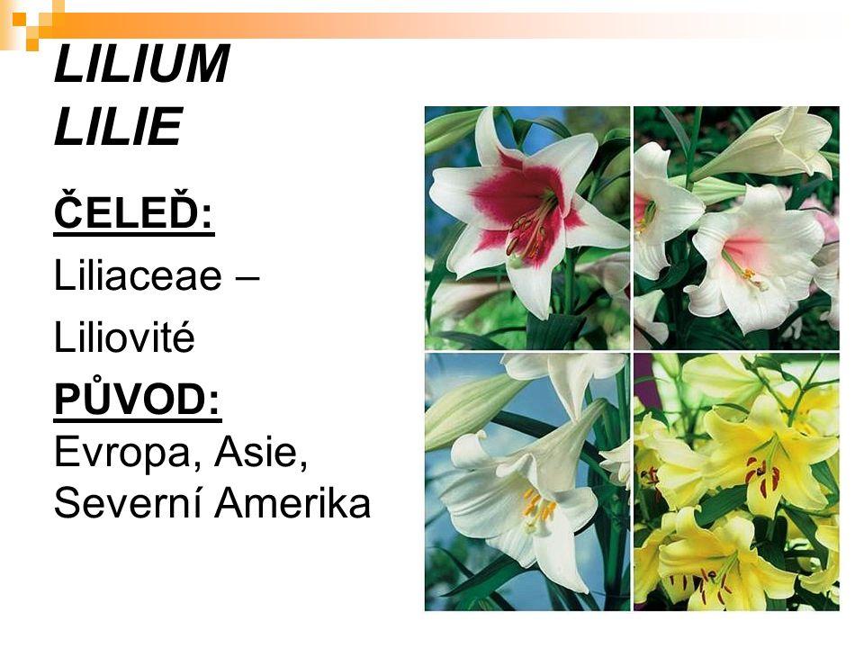 LILIUM LILIE ČELEĎ: Liliaceae – Liliovité PŮVOD: Evropa, Asie, Severní Amerika