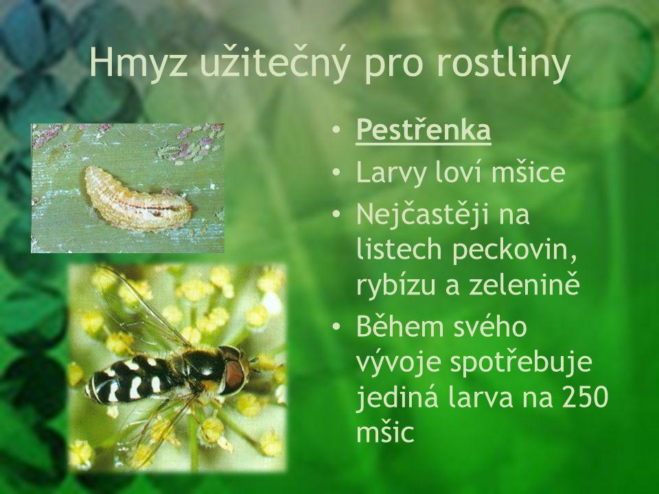 Hmyz užitečný pro rostliny Pestřenka Larvy loví mšice Nejčastěji na listech peckovin, rybízu a zelenině Během svého vývoje spotřebuje jediná larva na