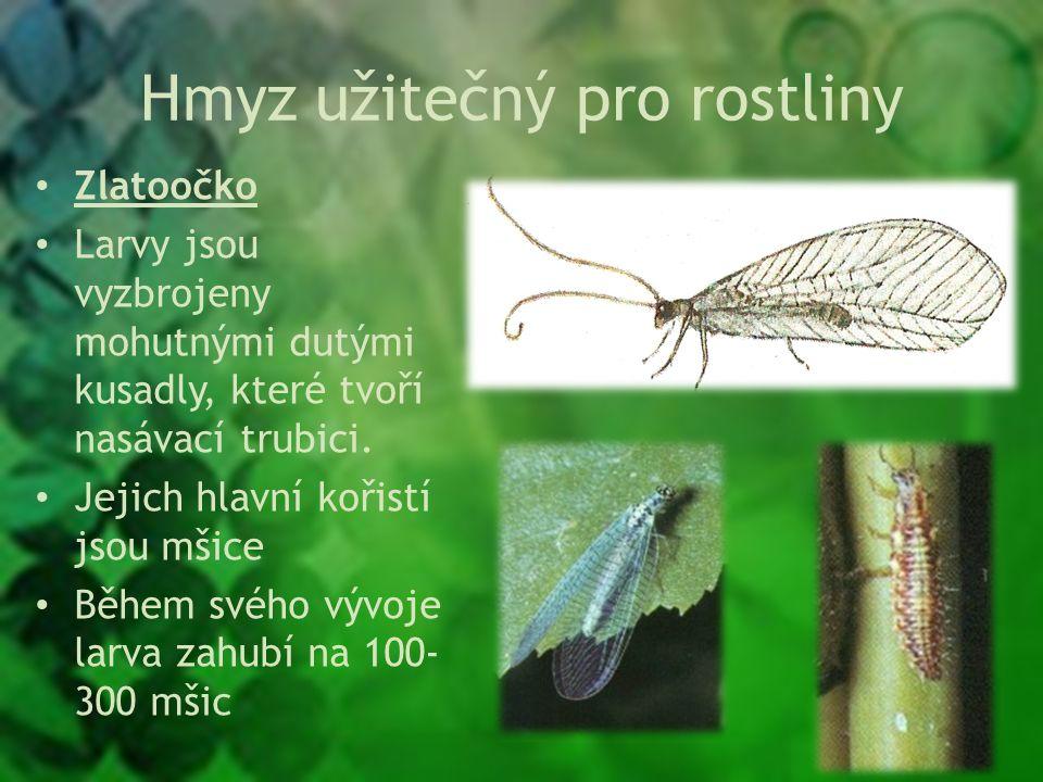 Hmyz užitečný pro rostliny Zlatoočko Larvy jsou vyzbrojeny mohutnými dutými kusadly, které tvoří nasávací trubici.