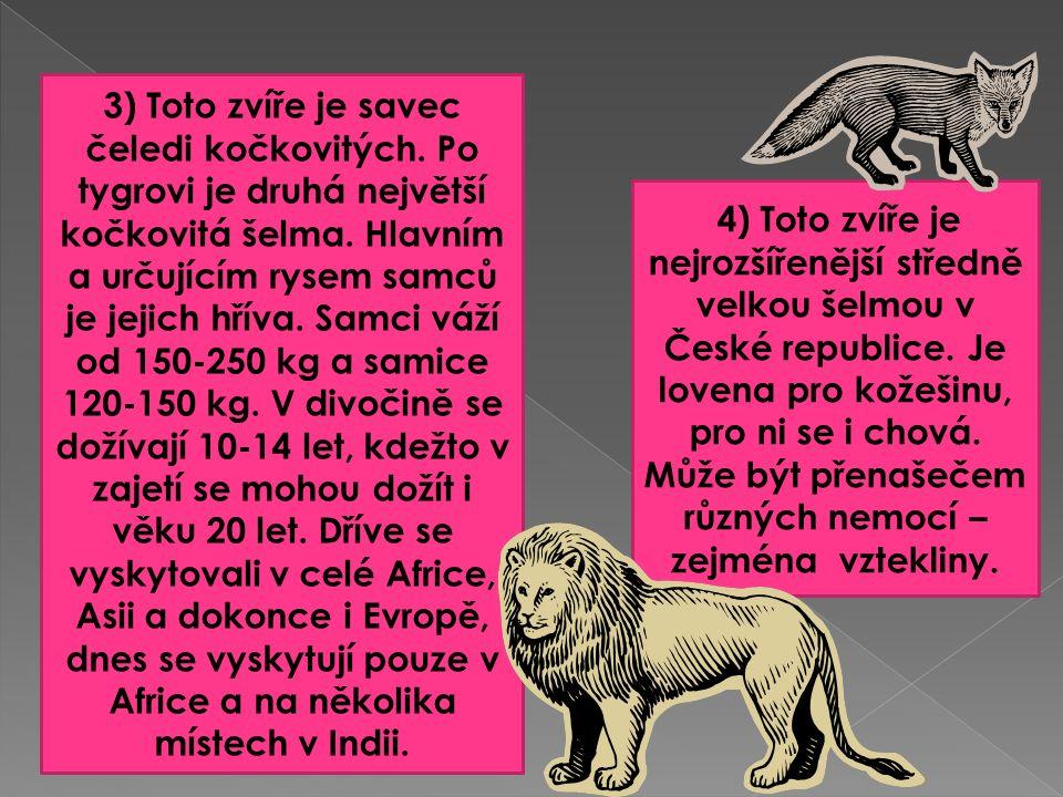 3) Toto zvíře je savec čeledi kočkovitých. Po tygrovi je druhá největší kočkovitá šelma.