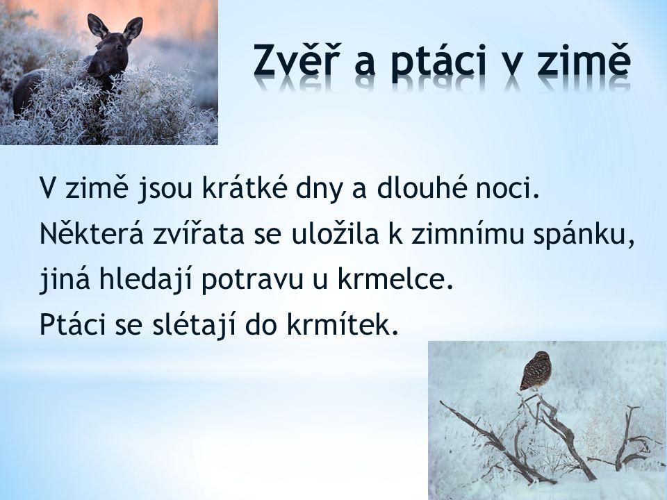 V zimě jsou krátké dny a dlouhé noci. Některá zvířata se uložila k zimnímu spánku, jiná hledají potravu u krmelce. Ptáci se slétají do krmítek.