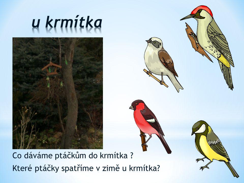 Co dáváme ptáčkům do krmítka ? Které ptáčky spatříme v zimě u krmítka?